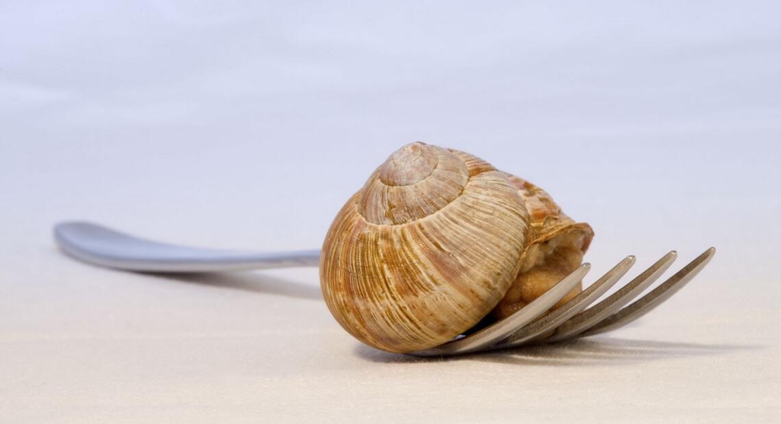 Id e recette de no l uf cocotte escargots blog de la maison royer - La maison des escargots ...
