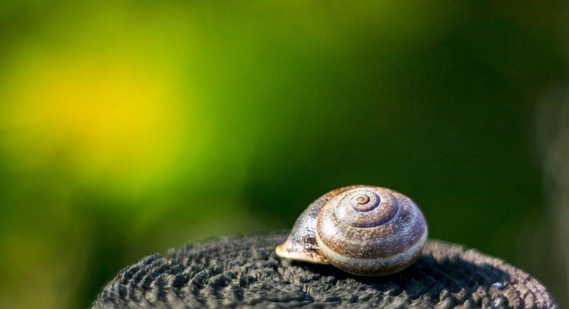 Les secrets de la coquille d 39 escargot blog de la maison royer - La maison des escargots ...