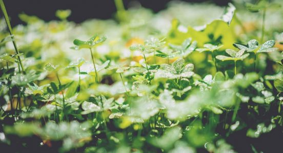 L'éco-certification un procédé respectueux de l'environnement