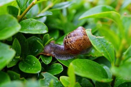 Que mange l 39 escargot blog de la maison royer - La maison des escargots ...