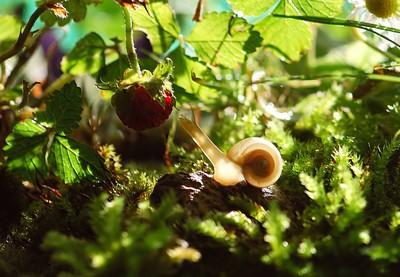 La radula de l'escargot