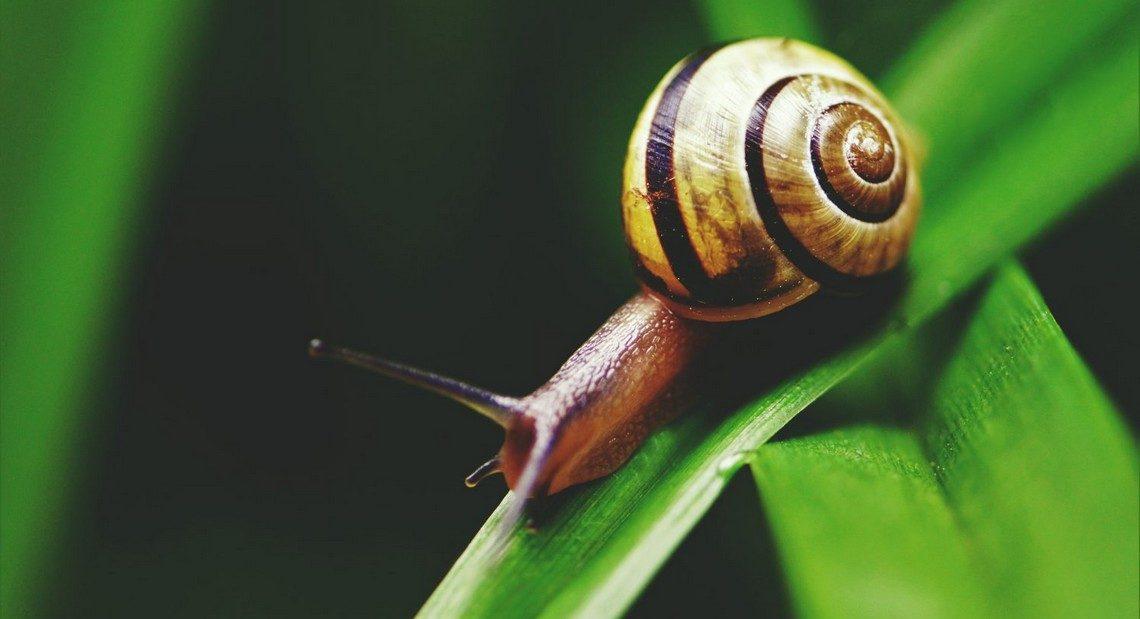La vie sexuelle des escargots