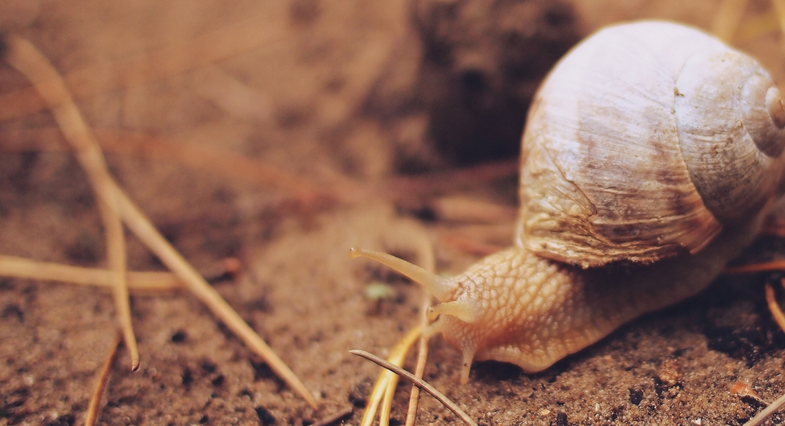 histoire-cuisine-escargots