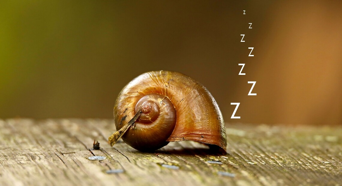 Hibernation des escargots