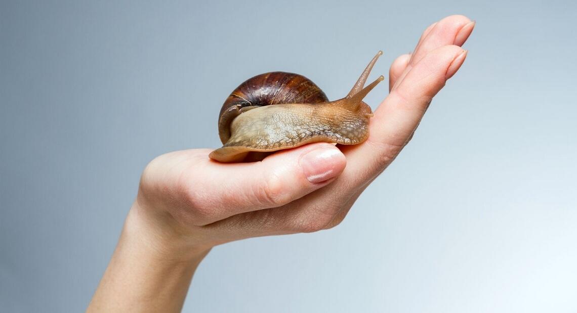 Escargot dans une main