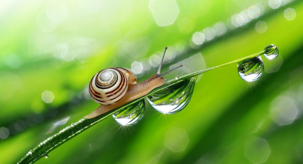 histoire vertus bave escargot