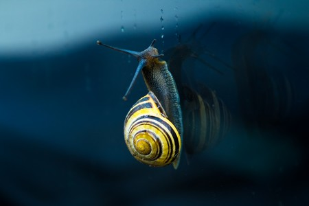 viatmine a magnesium bienfaits escargot
