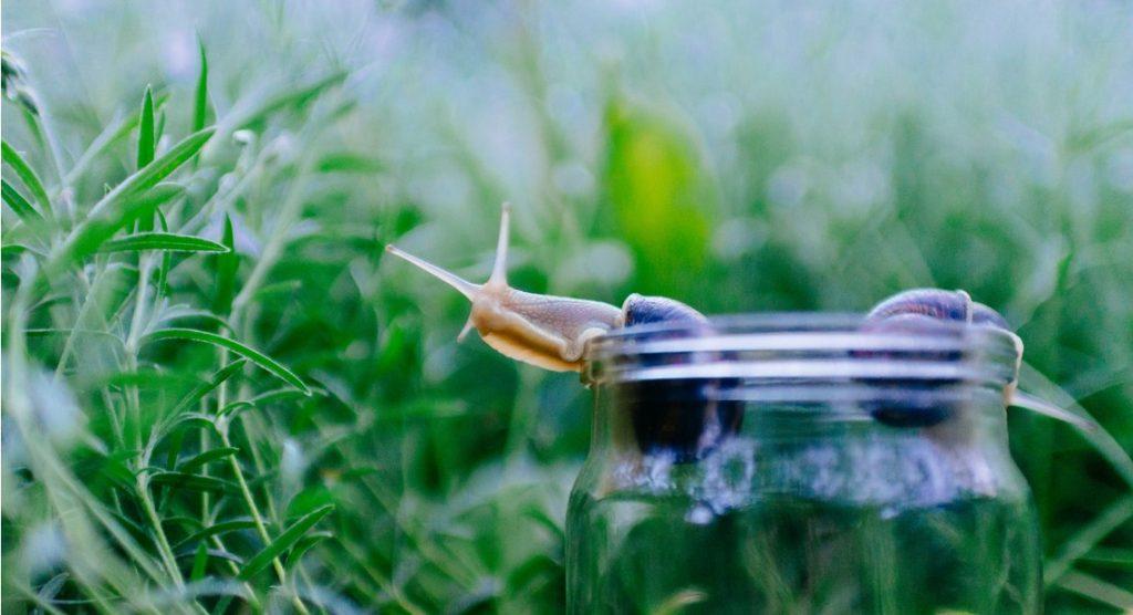 L'efficacité de la bave d'escargot contre les rides