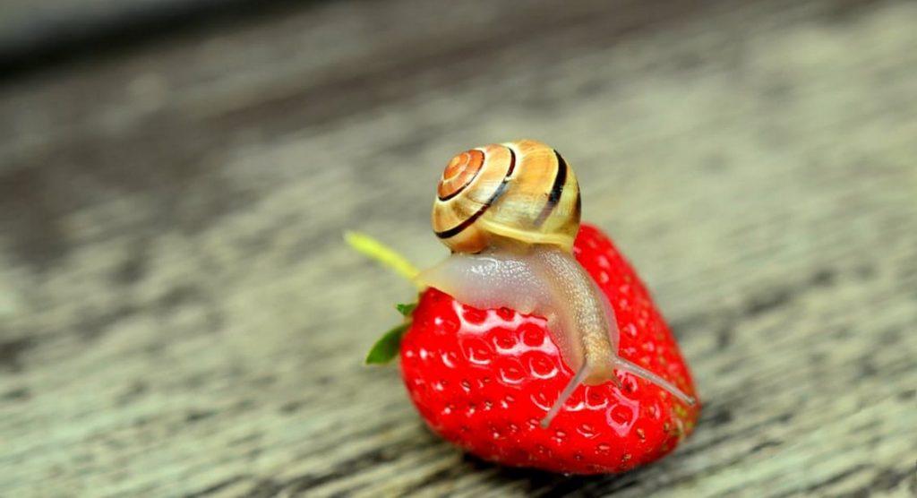 L'alimentation des escargots