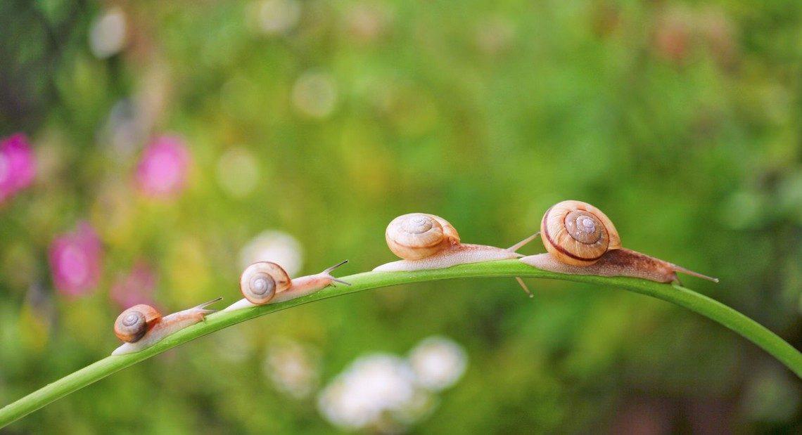 Qu 39 est ce que l 39 extrait de bave d 39 escargot blog de la maison royer - La maison des escargots ...